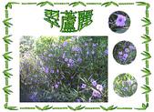 flower:07翠茹莉.JPG