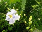 flower:鄧伯-17.jpg
