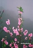 flower:杏花17.jpg