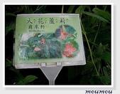 flower:zoo-大花蘆莉01.jpg