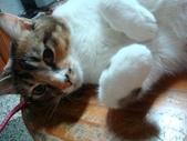 貓寶貝:1094134904.jpg