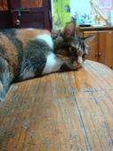 貓寶貝:1094134906.jpg