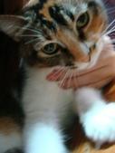 貓寶貝:1094134907.jpg
