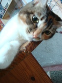 貓寶貝:1094134909.jpg
