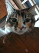 貓寶貝:1094134910.jpg
