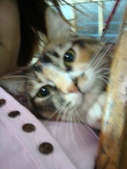 貓寶貝:1094134911.jpg