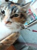 貓寶貝:1094134912.jpg