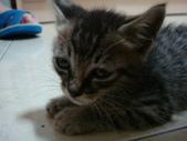 貓寶貝:1094134913.jpg