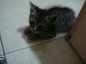 貓寶貝:1094134914.jpg