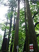2010.7.12下山出去玩:030~榛名神社~千本杉.JPG