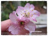 南投:IMG_0041_Fotor.jpg