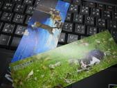 淡水有貓-愛的連線攝影展:IMG_0036.JPG