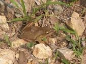 東莞松山湖:松山湖樹蛙
