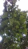 玫瑰花:IMAG4833.jpg