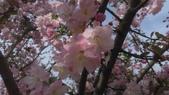 春天的花:IMAG4155.jpg