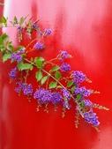 祝福眾生:喜氣的紫金露花3