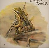 習作與畫作回憶:舊畫作:蛙