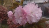 春天的花:IMAG4198.jpg