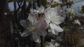 春天的花:IMAG4167.jpg