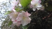 春天的花:IMAG4175.jpg
