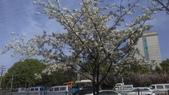 春天的花:IMAG4289.jpg