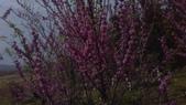 春天的花:IMAG4172.jpg