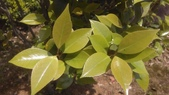 春天的花:IMAG4683.jpg