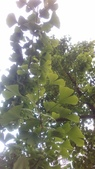 玫瑰花:IMAG4832.jpg
