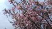 春天的花:IMAG4154.jpg