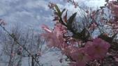春天的花:IMAG4158.jpg
