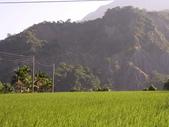 台東卑南初鹿:小黃山旁33