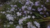 春天的花:IMAG4290.jpg