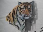 習作與畫作回憶:770601學生時期:虎