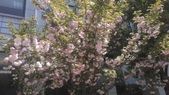 春天的花:IMAG4287.jpg