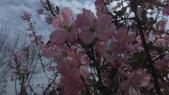 春天的花:IMAG4157.jpg