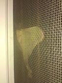 自由的精靈:紗窗上鵝黃色的水青蛾1