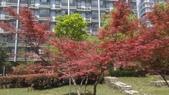 春天的花:IMAG4241.jpg