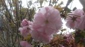 春天的花:IMAG4197.jpg