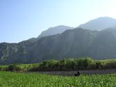 台東卑南初鹿:小黃山旁17