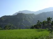 台東卑南初鹿:小黃山旁34