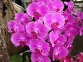 蕙質蘭心-雅蘭欣賞:典雅的蘭花123