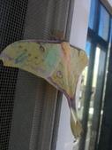 自由的精靈:白天的水青蛾3