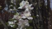 春天的花:IMAG4159.jpg