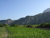 台東卑南初鹿:小黃山旁18