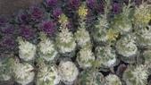 春天的花:IMAG4047.jpg