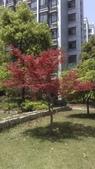 春天的花:IMAG4242.jpg