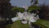 春天的花:IMAG4170.jpg