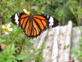 自由的精靈:翩翩彩蝶6