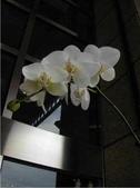蕙質蘭心-雅蘭欣賞:典雅的蘭花144