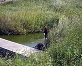 湖東巡守隊與西湖河川巡守隊第一次合作:IMGP1259.JPG